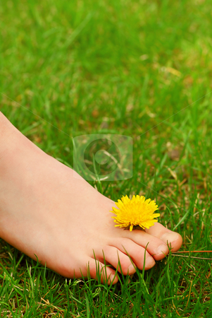 Barefoot stock photo, Closeup on young girl's bare foot in green grass with a dandelion by Elena Elisseeva