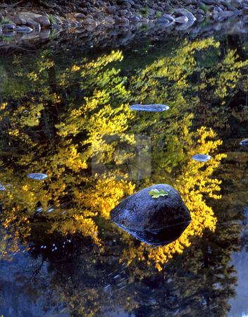 Rock and Leaf Merced River 2 stock photo, An oak leaf on a rock in the Merced Rivein Yosemite National Park, California. by Mike Norton