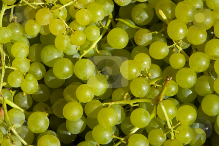 Wine grapes, white stock photo, Http://de.wikipedia.org/wiki/Weintrauben by Wolfgang Heidasch