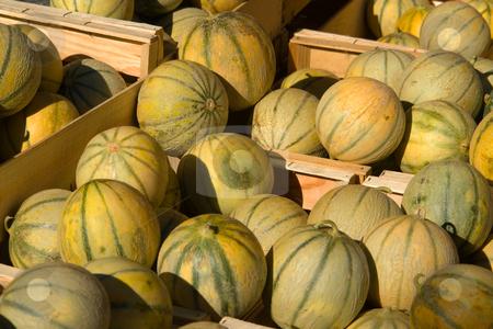 Charentais Melon stock photo, Http://de.wikipedia.org/wiki/Charentais-Melone by Wolfgang Heidasch