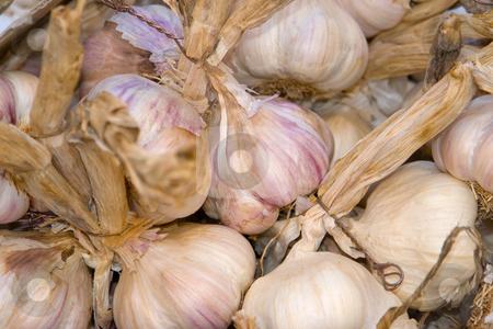 Garlic stock photo,  by Wolfgang Heidasch