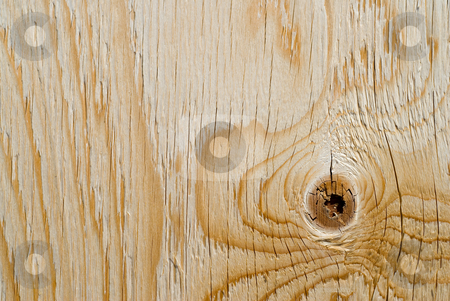 Plywood stock photo, Close-up view of the grain on a sheet of plywood by Richard Nelson