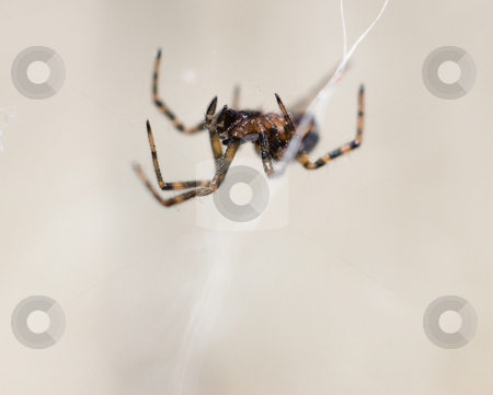 Macro Spider stock photo, Macro view of a spider spinning his web by Richard Nelson