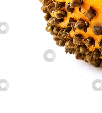 Cloves and Orange stock photo, Detailed image of a bright orange with brown cloves, on a white background.  Space for text or other material remains on left of image.  Vertical orientation. by Jill Oliver