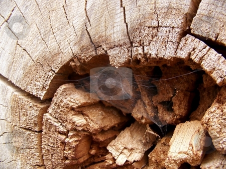 Cobweb in Wood stock photo, Image of a cobweb in the the center of an old log. by Jill Oliver