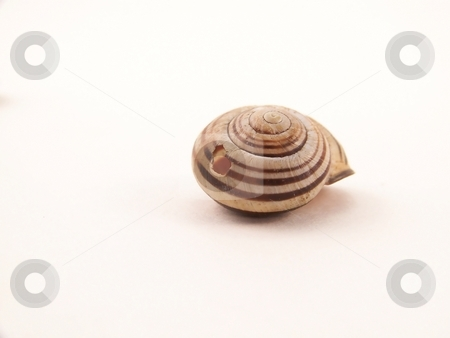 Single Snail Shell with Hole stock photo, Image of a single striped, epmty snail shell with a hole in it. by Jill Oliver