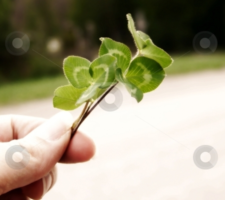 Clover and Hand stock photo, Image of a hand holding bright green clover by their stems, with curved line of grass in background.  Soft focus and horizontal orientation. by Jill Oliver