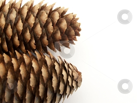 Two Pinecones stock photo, Image of two pinecones placed beside one another, facing different directions. by Jill Oliver