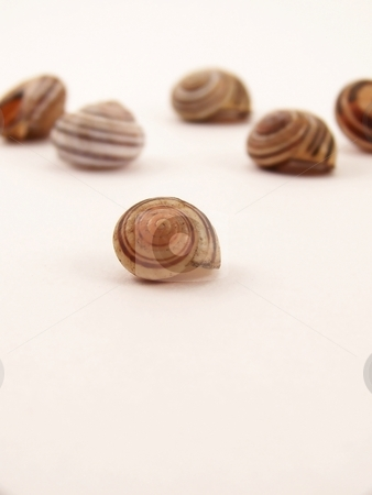 Group of Snail Shells stock photo, Image of a group of striped snail shells of different sizes.  Focus is on small shell in the foreground. by Jill Oliver