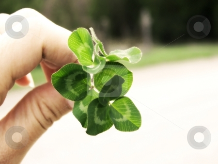 Clover and Hand stock photo, Image of a hand holding a bunch of bright green clover, with a curved line of grass in background.  Soft focus and horizontal orientation. by Jill Oliver