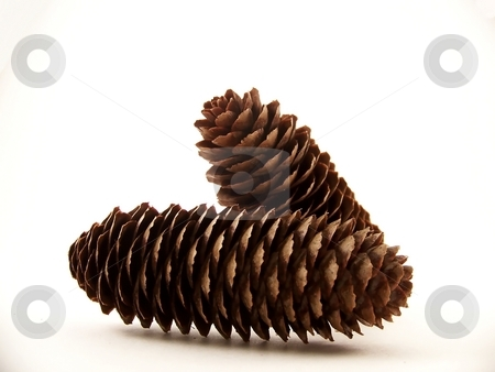 Two Pinecones stock photo, Horizontal image of two pine cones, one laying flat and the other leaning on it. by Jill Oliver