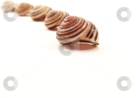 Line of Striped Snail Shells stock photo, Image of empty striped snail shells in a curved line, on white. by Jill Oliver