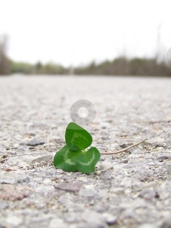Clover on Road