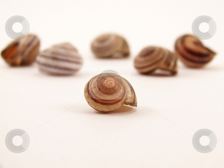 Group of Striped Snail Shells stock photo, Image of striped snail shells in different sizes.  Focus is on small shell in foreground. by Jill Oliver