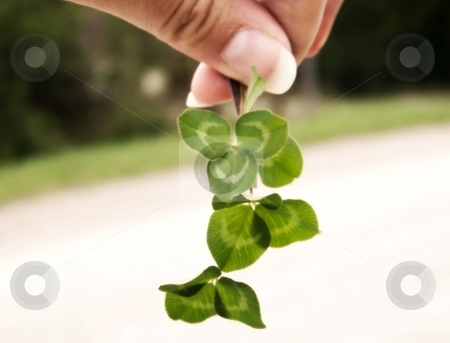 Clover and Hand stock photo, Image of a hand holding bright green clover, with line of green grass visible in background.  Soft focus and horizontal orientation. by Jill Oliver