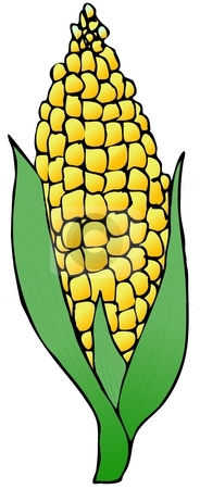 Ear Of Corn stock photo, This illustration depicts an ear of yellow corn. by Dennis Cox