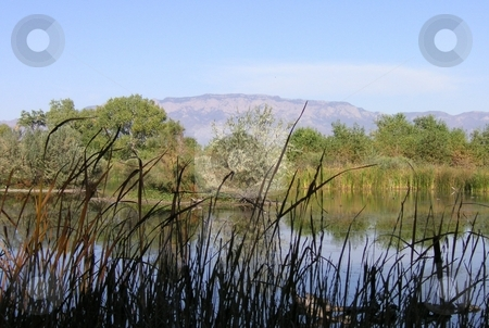 Sandia Mountains overlooking Pond stock photo, The Sandia Mountains in distance overlooking a pond near the Rio Grande in New Mexico. by Caley Gonyea