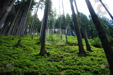 Mountain forest stock photo, Urlaub Pfingsten 2006 Hinterglemm ???sterreich by Wolfgang Heidasch
