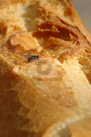 Fly eating bread stock photo, Urlaub Sommer 2006 by Wolfgang Heidasch