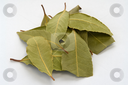 Bay leaves stock photo, Lorbeer Bl???tter by Wolfgang Heidasch