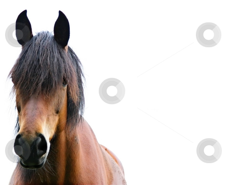 Brown horse stock photo, A photography of a brown horse standing by Markus Gann