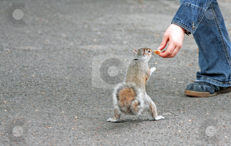 Squirrel stock photo, A photography of a squirrel that eats bread by Markus Gann