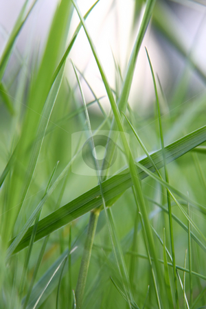 Green grass macro stock photo, A photography of a green grass macro by Markus Gann