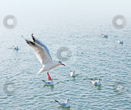 Seagull stock photo, A photograph of a sideview of a seagull by Markus Gann