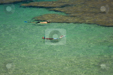 Snorlerers in the Clear Tropical Waters stock photo, Snorlerers in the Clear Tropical Waters on a Relaxing Summer Day by Andy Dean