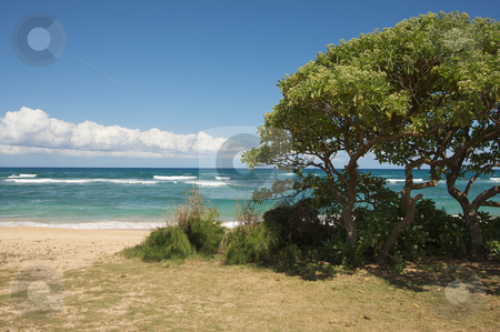 Inviting Tropical Shoreline stock photo, Inviting Tropical Shore on the Kauai Coast. by Andy Dean