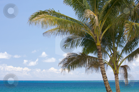 Palm Trees and Tropical Waters stock photo, Palm Trees and Inviting Tropical Waters. by Andy Dean