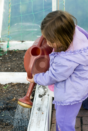 Little Helper stock photo, Girl watering plants in a greenhouse with a watering can by Richard Nelson
