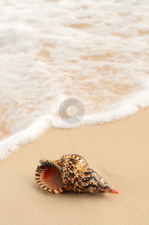 Seashell in front of foaming ocean wave stock photo, Seashell and ocean wave on sandy tropical beach by Elena Elisseeva