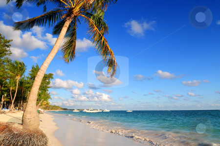 Tropical beach  stock photo, Tropical sandy beach with palm trees and fishing boats by Elena Elisseeva