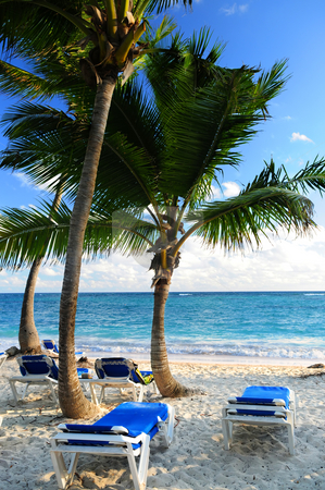 Sandy beach of tropical resort stock photo, Sandy beach of tropical resort with palm trees and reclining chairs by Elena Elisseeva