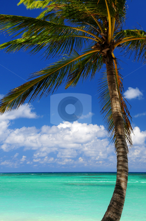 Scenic view on Caribbean sea stock photo, Scenic view on Caribbean sea with palm tree by Elena Elisseeva