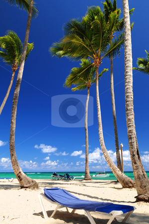 Sandy beach on Caribbean resort stock photo, Sandy beach on Caribbean resort with tall palm trees by Elena Elisseeva
