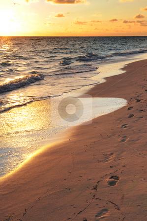 Footprints on sandy beach at sunrise stock photo, Footprints on sandy tropical beach at sunrise by Elena Elisseeva