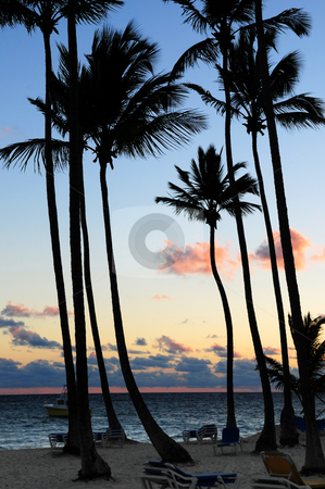 Tropical sunrise stock photo, Palm trees silhouettes at sunrise at tropical resort by Elena Elisseeva