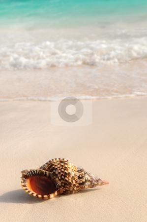 Seashell and ocean wave stock photo, Seashell and ocean wave on sandy tropical beach by Elena Elisseeva