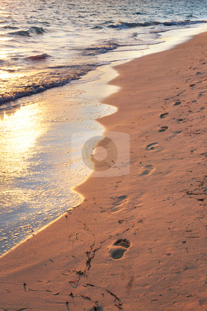 Tropical beach with footprints  stock photo, Tropical sandy beach with footprints at sunrise by Elena Elisseeva