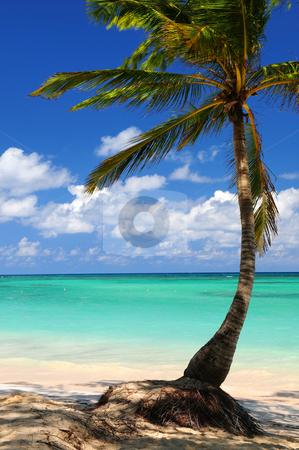 Beach of a tropical island stock photo, Sandy beach of a tropical island with palm tree by Elena Elisseeva