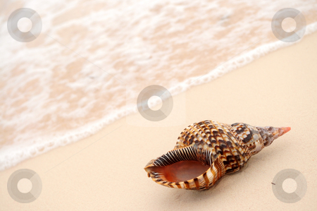 Seashell and ocean wave stock photo, Seashell and ocean wave on sandy tropical beach by Elena Elisseeva