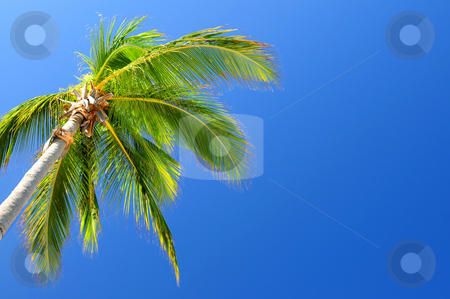 Palm on blue sky background stock photo, Background of bright blue sky with palm tree top by Elena Elisseeva