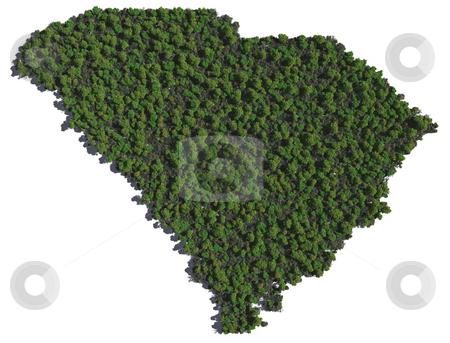 South Carolina in Trees stock photo, The shape of South Carolina grown in trees. by Allan Tooley