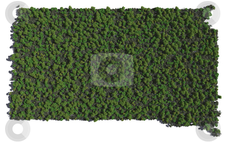 South Dakota in Trees stock photo, The shape of South Dakota grown in trees. by Allan Tooley