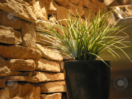 Grass plant decoration stock photo, Green grass in a pot near stone wall, house interior by Elena Elisseeva