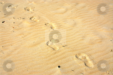 Sand footprints stock photo, Background of yellow sand surface with footprints by Elena Elisseeva