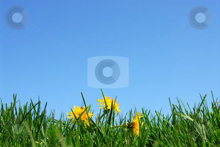 Grass and sky background stock photo, Background of grass and cloudless blue sky by Elena Elisseeva