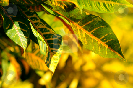 Green leaves stock photo, Closeup on green leaves of tropical plant by Elena Elisseeva